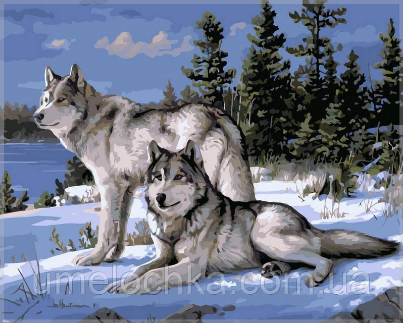 Раскраска по номерам Babylon  Волки на снегу