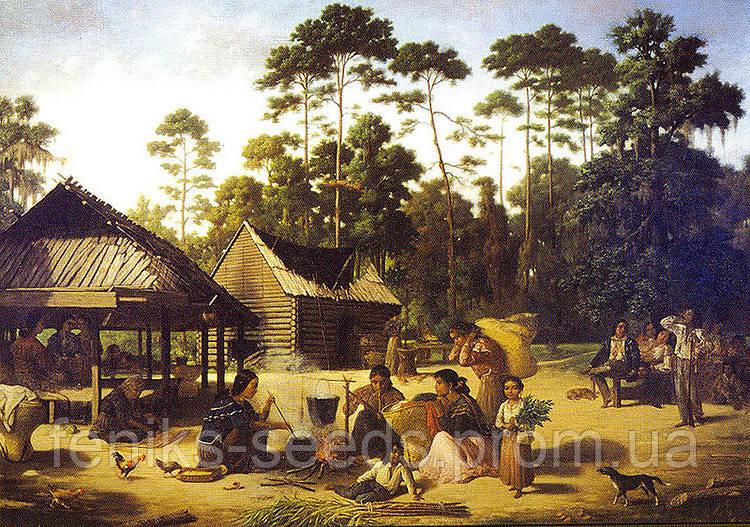 Семена Табак Перик - черное золото индейцев