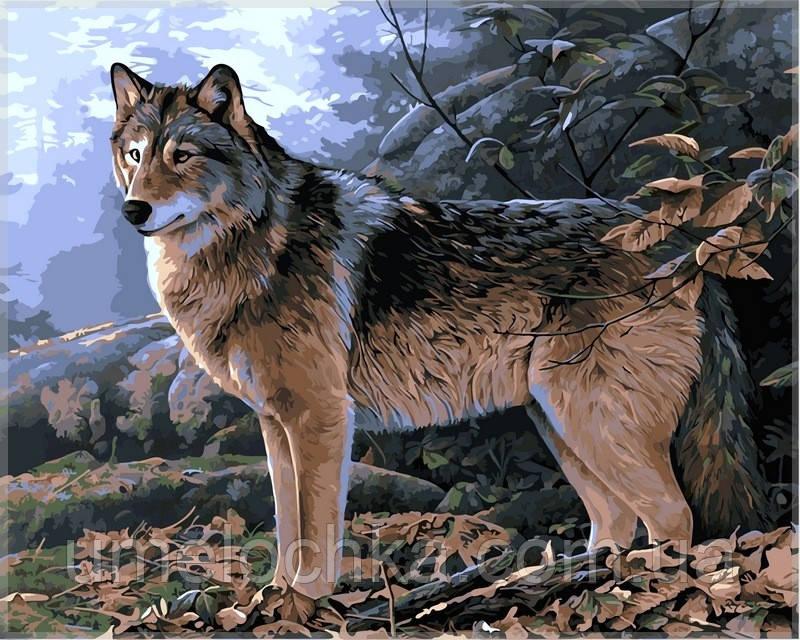 Картина по номерам на холсте Babylon Волк в осеннем лесу
