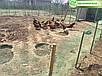 Сетка садовая на метраж - ширина - 1 м, 12*14 зеленая, фото 6