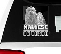 Автомобильная наклейка на стекло Мальтийская болонка (мальтезе) на борту, фото 1