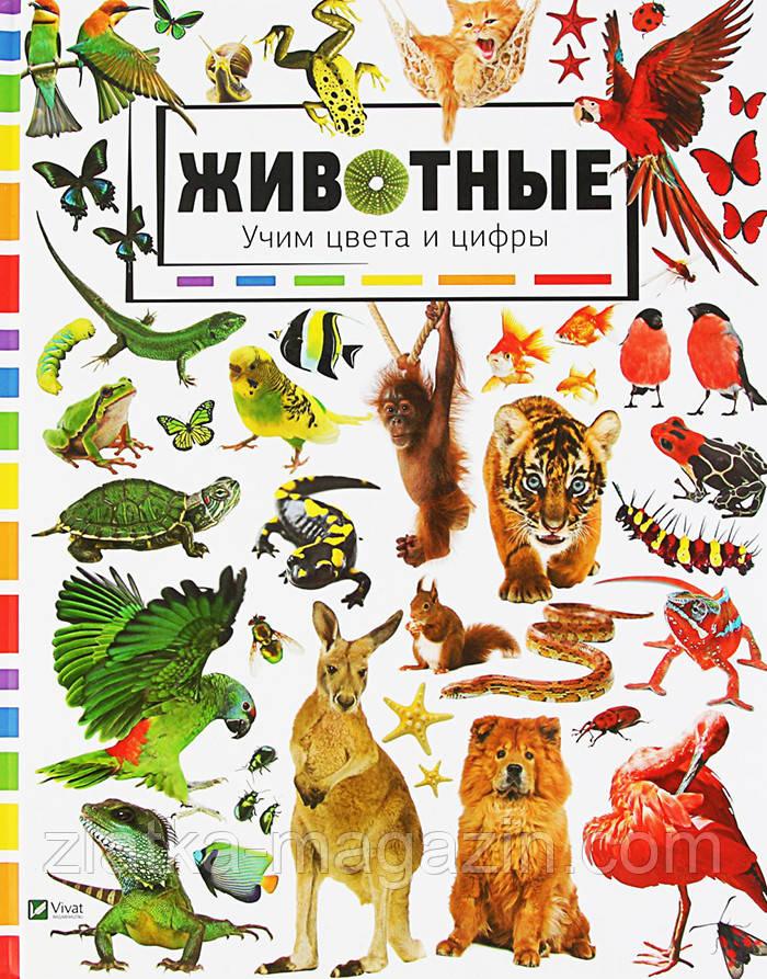 Животные. Учим цвета и цифры - Мария Жученко (9786176909248)