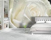 Фотообои, Цветы Бумага гладкая, 200х310 см, fo01inB_fl10637