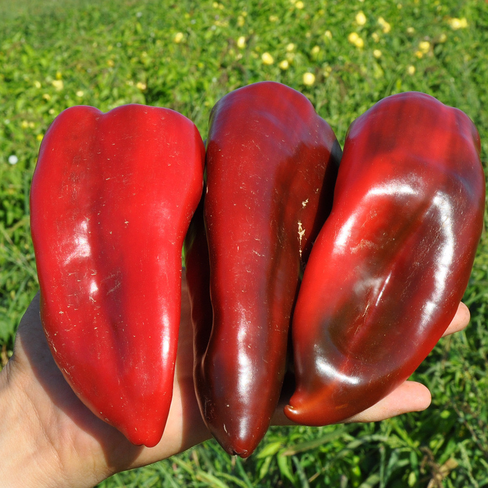 Семена перца сладкого Редкан F1 (250 сем.)