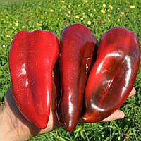 Семена перца сладкого Редкан F1 (1000 сем.)
