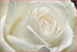 Фотообои, Цветы, фото 2