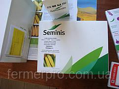Семена кукурузы Трофи F1 \ Trophy F1  5000 семян Seminis