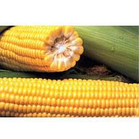 Семена кукурузы сладкой Харди F1 (5000 сем.)