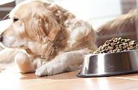 Часто задаваемые вопросы о питании собак
