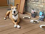 Чем кормить взрослых собак
