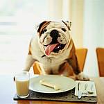 Зачем нужны витамины и добавки для собак
