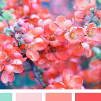 Коралл — цвет сезона весна лето 2019