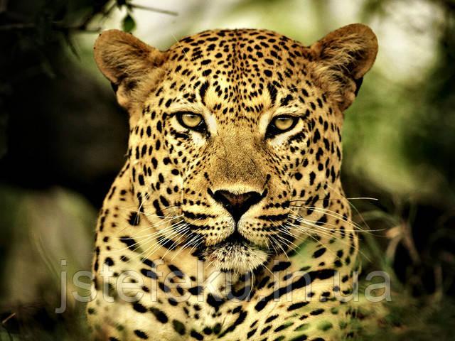 Леопард со скидкой! утягивающее белье недорого