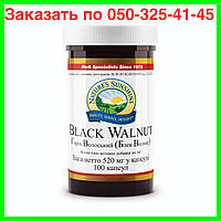 Грецкий черный орех Nsp. Грецкий черный орех (Black Walnut) NSP. Натуральная БИОДОБАВКА