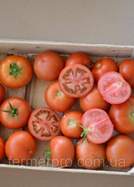 Семена томата E15B.50206 F1 1000 cем. Enza Zaden