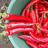Семена перца острого Шакира F1 (500 сем.) Enza Zaden, фото 2