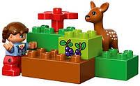 Lego Duplo Лесной заповедник 10584, фото 9