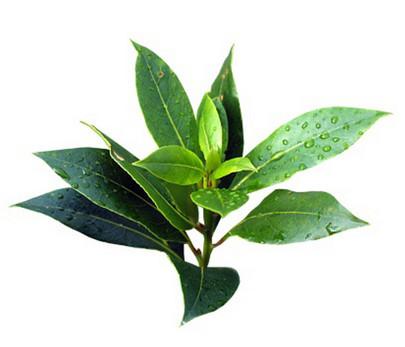 15. Натуральное эфирное масло чайного дерева 100мл. Читать подробно