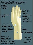 Перчатки PROFEEL POLYISOPRENE АНТИСПИД, фото 2
