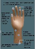 Перчатки ProFeel MICRO хирургические латексные, тонкие, неопудренные, коричневого цвета, фото 2