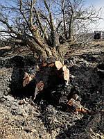 Удалить дерево. Спил деревьев