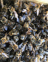 Бджолиний підмор 1 кг