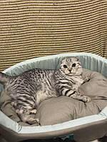 Кот Лаки на лежаке Ferplast Dandy 55