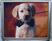 """Картина """"Песик із трояндою"""""""