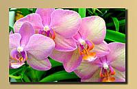 Картина на холсте Орхидеи 2 54*34.5 см.