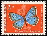 Насекомые и бабочки