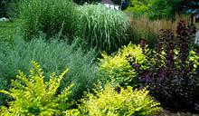Кустарники вечнозеленые, листопадные