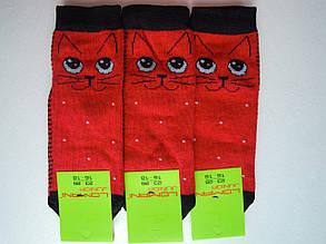Носки Детские котики  красные размер 23-26 на 3-5 лет