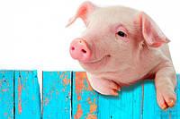 Премикс (ВМС) для свиней Финишер 2,5%
