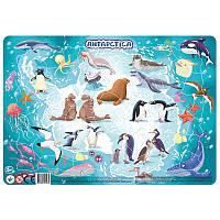 Картонные пазлы в рамке Материки Антарктида / Континенти Антарктида (53 дет.), Додо / Dodo