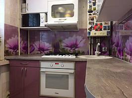 Скинали - цветы фиолетовой диморфотеки - доставка и монтаж в Днепре 3