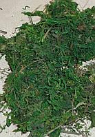 Натуральный мох зеленый 50 грам