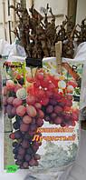 Саженец винограда Кишмиш лучистый