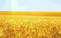 Куплю Пшеницу 2-6 класс