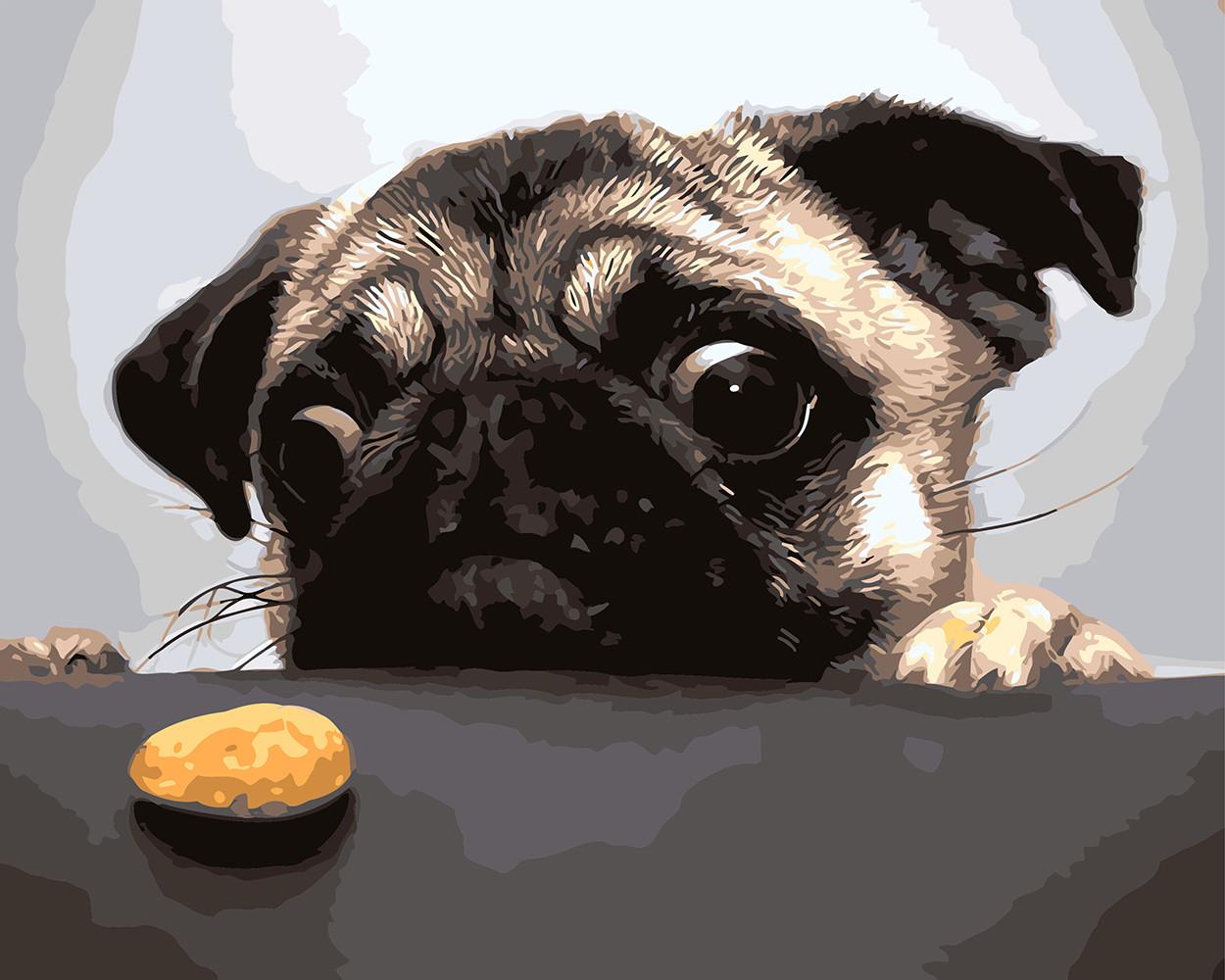Картина по номерам Мопс и печенька, 40x50 см., Rainbow art