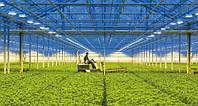 Лампы General Electric для растениеводства