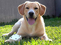 Как обезопасить собаку от клещей и комаров