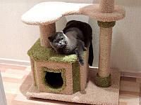 Зачем нужны когтеточки для кошек