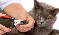 Как правильно обрезать когти у кошек и собак