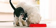 Можно ли кошку кормить кормом для собак