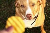 Можно ли собакам давать чипсы