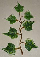 Лист плюща зеленый с белым