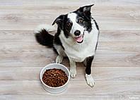 Можно ли кормить собаку только сухим кормом
