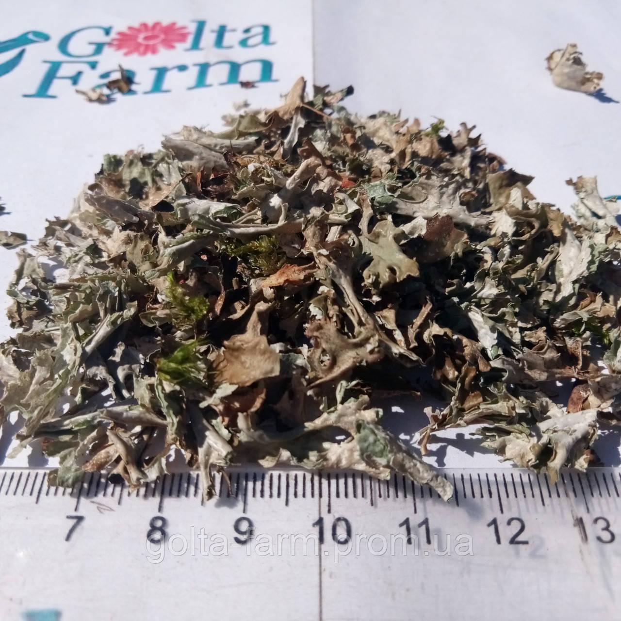 Исландский мох (Цетрария) 100 грамм