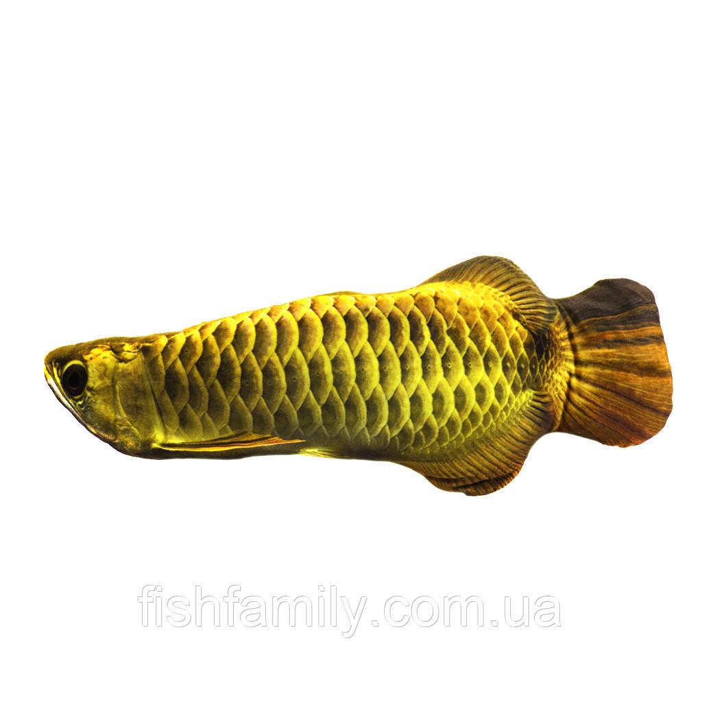 Подушка-рыба 3KFish Аравана золотистая  59х25см(3KB2075)