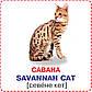 БАО Розумні картки Кішки, фото 2